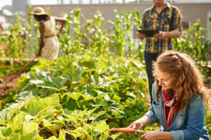 People gardening in their local community for Neighbour Day